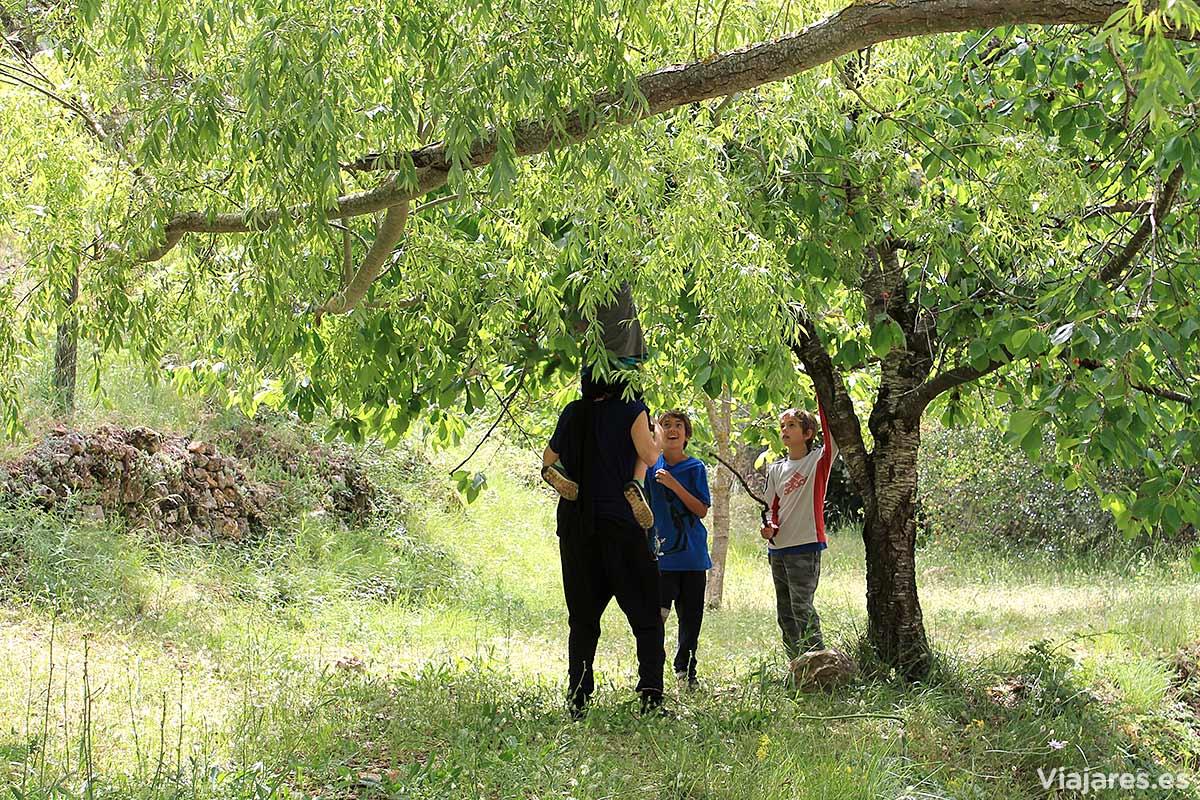 Intentando alcanzar algunas cerezas