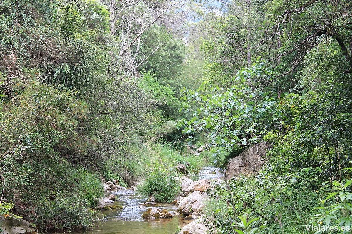La vegetación casi se apodera del río Els Estrets