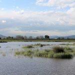 Humedales en el Delta del Llobregat