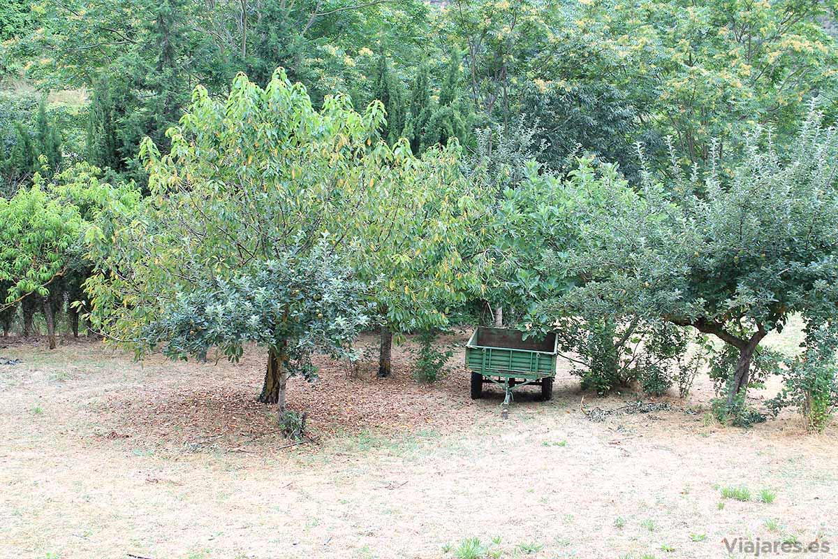 Árboles frutales en Mura