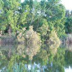 Reflejos en el agua en Remolar - Filipines
