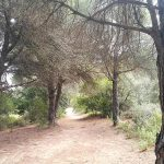 Camino Creu de Montcabrer