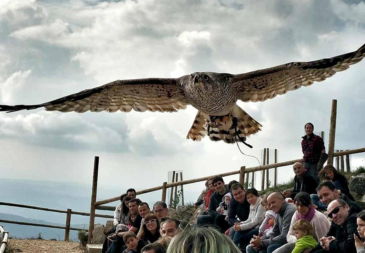 Exhibición de aves rapaces en Zoo del Pirineu