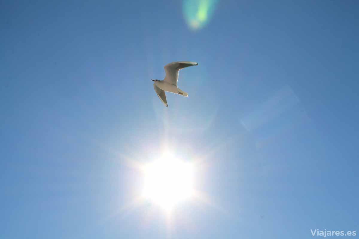 Gaviota en el cielo de la Côte d'Azur